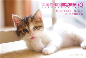 Hiraco10_dmura_2